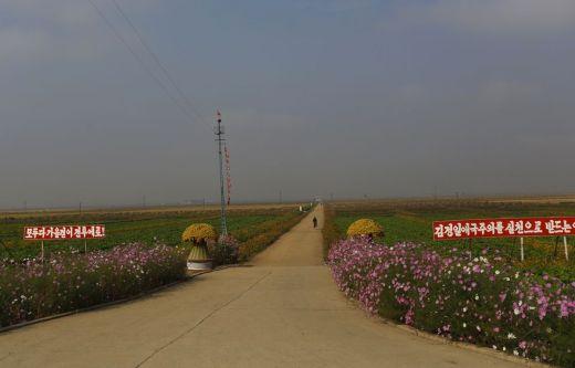 (gauche): Se battre pour la récolte »  -  (droite) Que fleurisse le patriotisme par notre Kim Jong