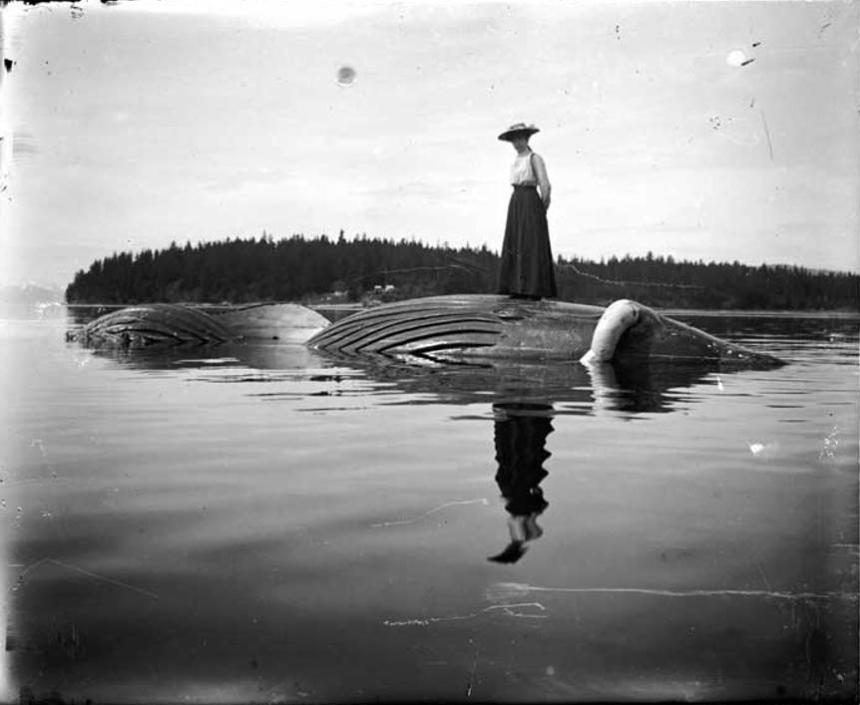 Vera Soboleff poses on dead whale, near Killisnoo. ca. 1896-1920.  Vincent I. Soboleff 09-39-10