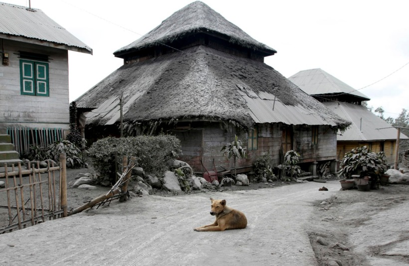 Dog sits in the middle of a road in an empty village after all villagers were evacuated a day after Mount Sinabung spewed ash at Mardingding village in Karo district
