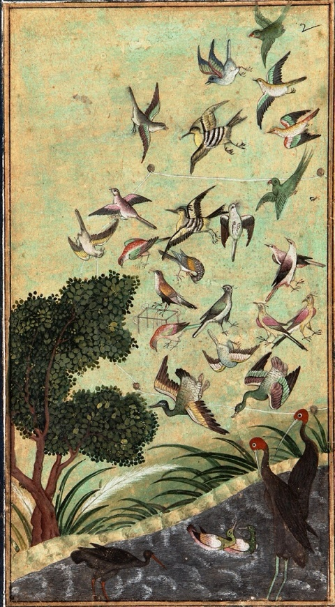 Birds at Baran, 16th century