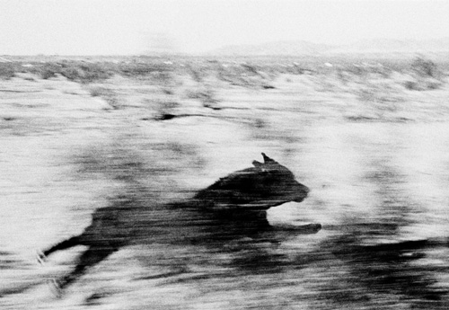 John Divola  photographs from the series Dogs Chasing My Car in the Desert  1996-2001