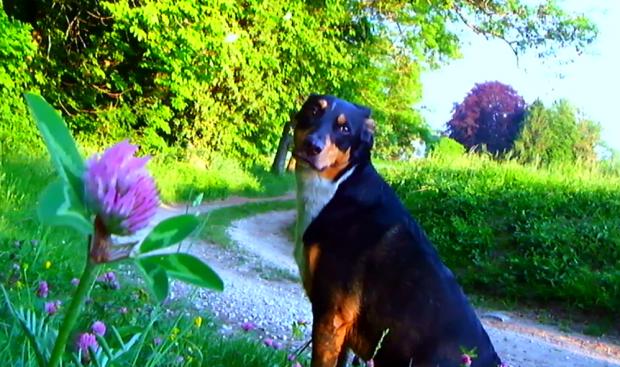 le chien, notre universel interprète