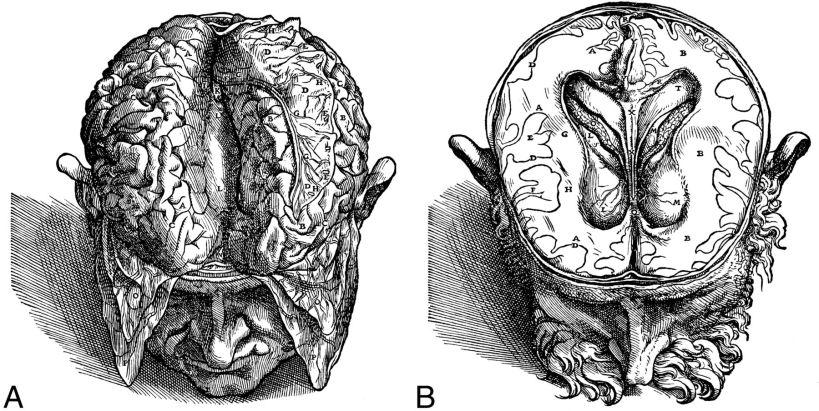 A, De Humani Corpus Fabrica, livre VII, Planche 3 L, corps calleux; D, Falx séparés et mis sur cerveau G. B, Planche 4 E Gyri, GH Blanc Matière O, plexus choroïde.