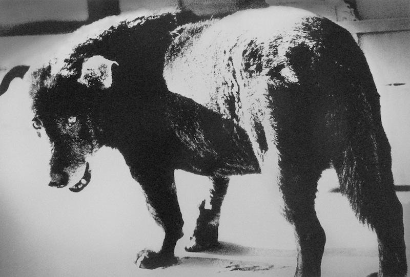 Stray Dog, Misawa 1,971 Daido Moriyama ©