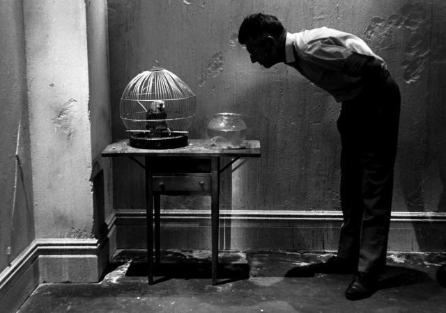 Steve Schapiro. Samuel Beckett En regardant Parrot, New York 1964